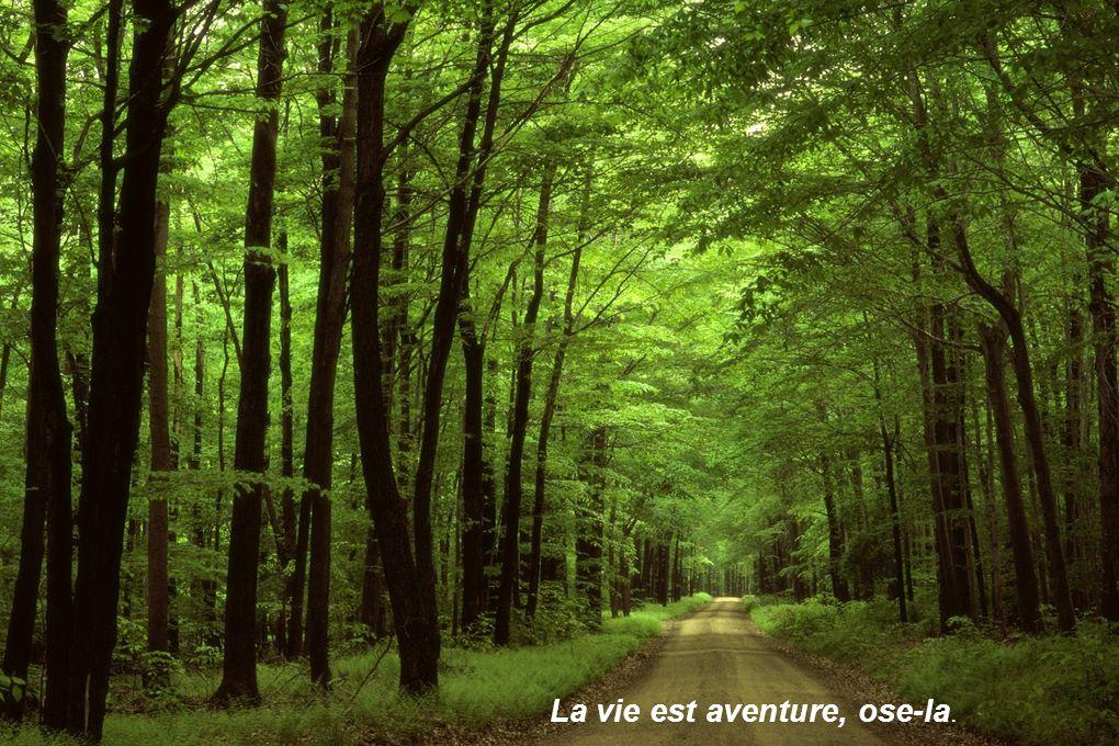 La vie est aventure, ose-la.