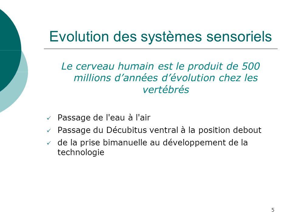 Evolution des systèmes sensoriels