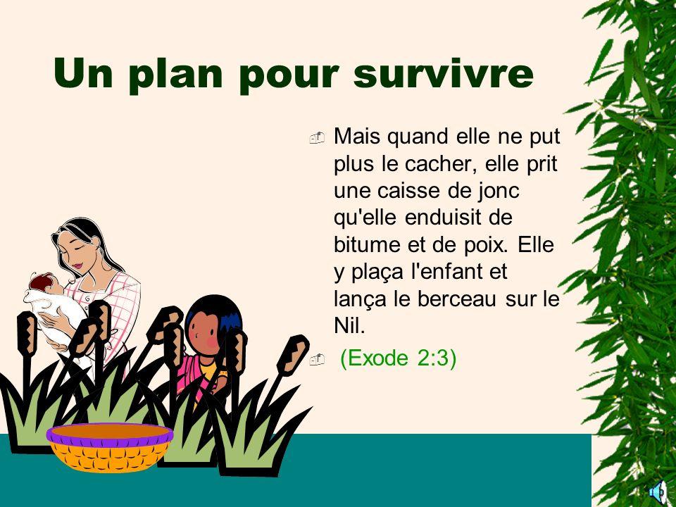 Un plan pour survivre