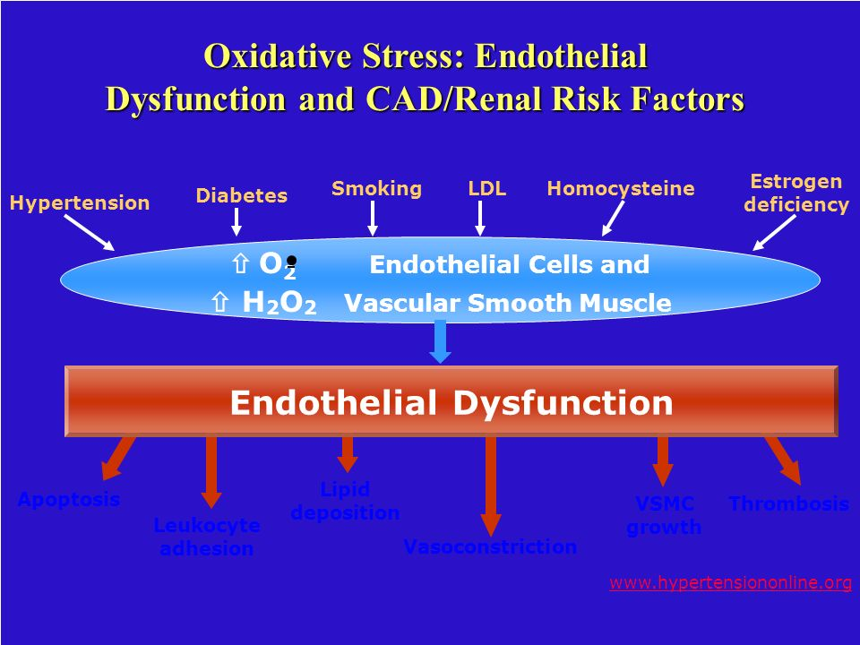 Oxidative Stress: Endothelial Dysfunction and CAD/Renal Risk Factors