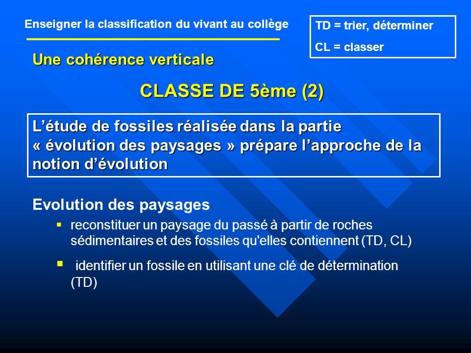 identifier un fossile en utilisant une clé de détermination (TD)