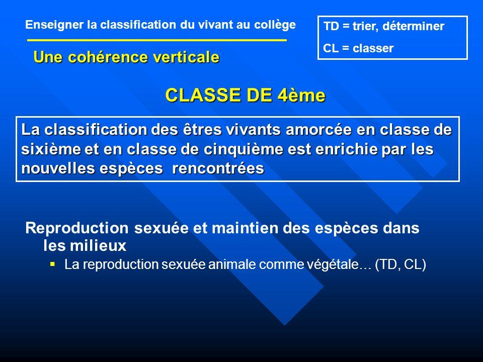 CLASSE DE 4ème Une cohérence verticale