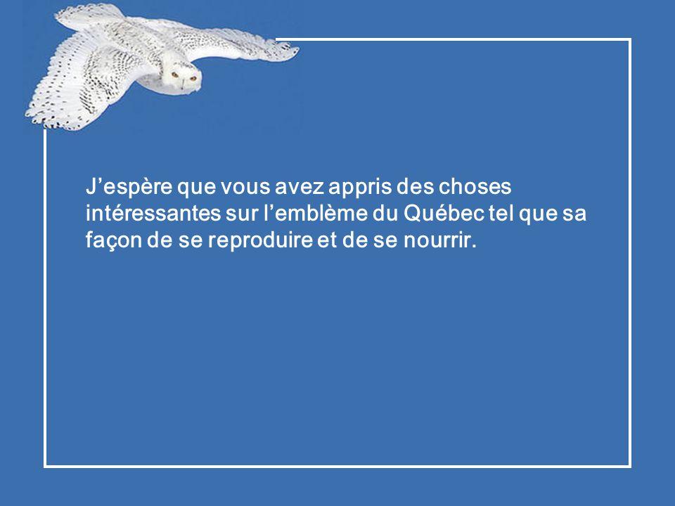 J'espère que vous avez appris des choses intéressantes sur l'emblème du Québec tel que sa façon de se reproduire et de se nourrir.
