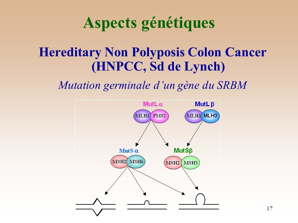 Aspects génétiques Hereditary Non Polyposis Colon Cancer (HNPCC, Sd de Lynch) Mutation germinale d'un gène du SRBM.