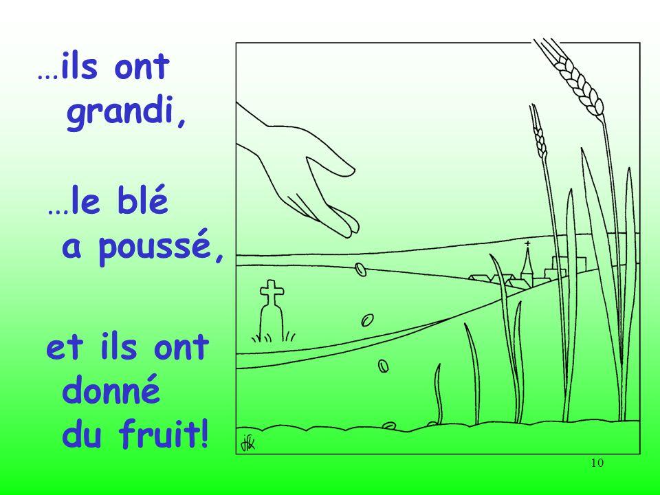 …ils ont grandi, …le blé a poussé, et ils ont donné du fruit!