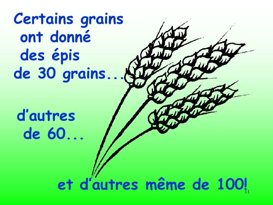 Certains grains ont donné des épis de 30 grains... d'autres de 60... et d'autres même de 100!