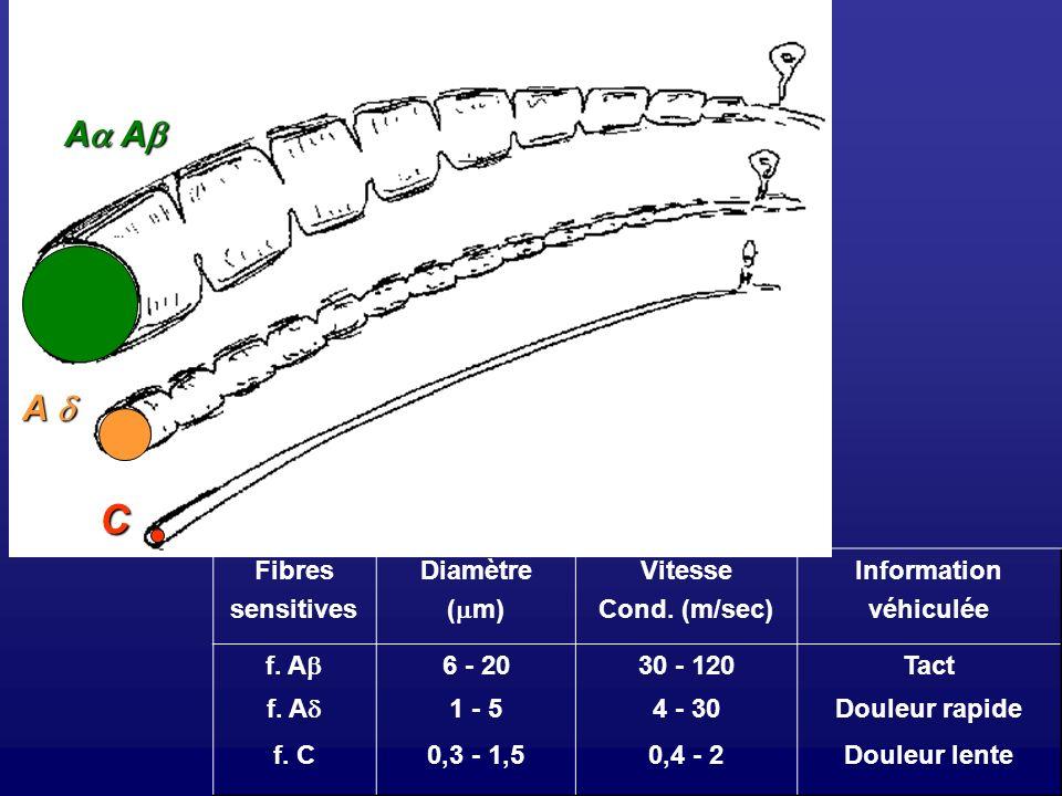 C Aa Ab A d Fibres sensitives Diamètre (m) Vitesse Cond. (m/sec)
