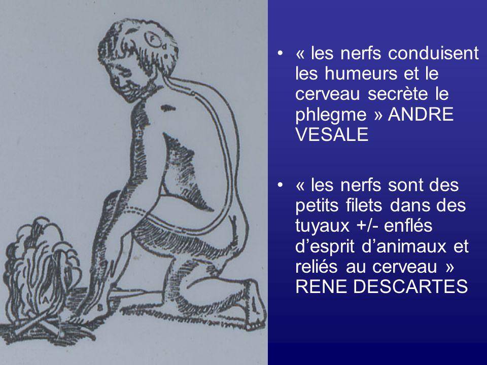 « les nerfs conduisent les humeurs et le cerveau secrète le phlegme » ANDRE VESALE