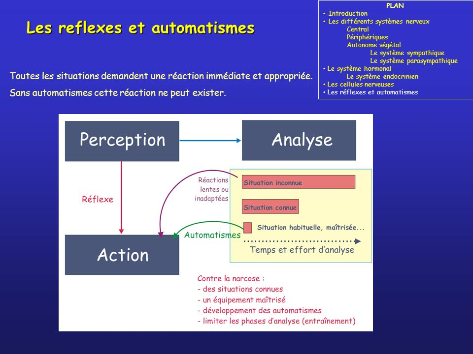 Les reflexes et automatismes