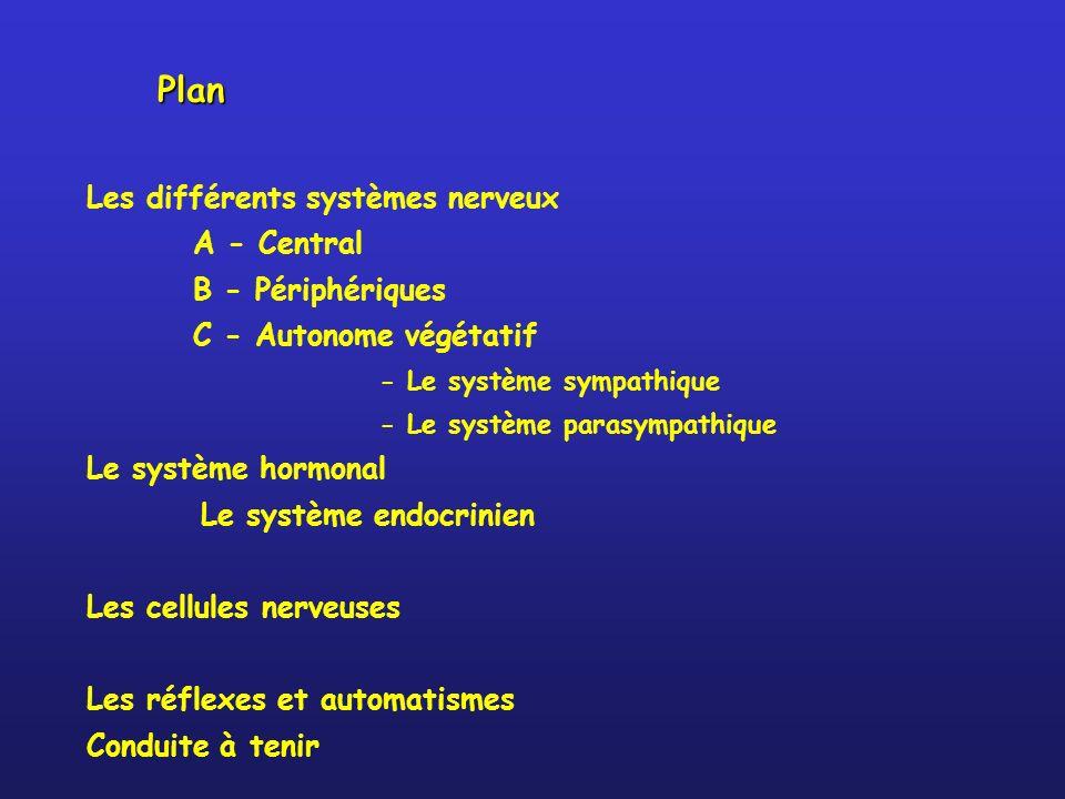 Plan Les différents systèmes nerveux A - Central B - Périphériques