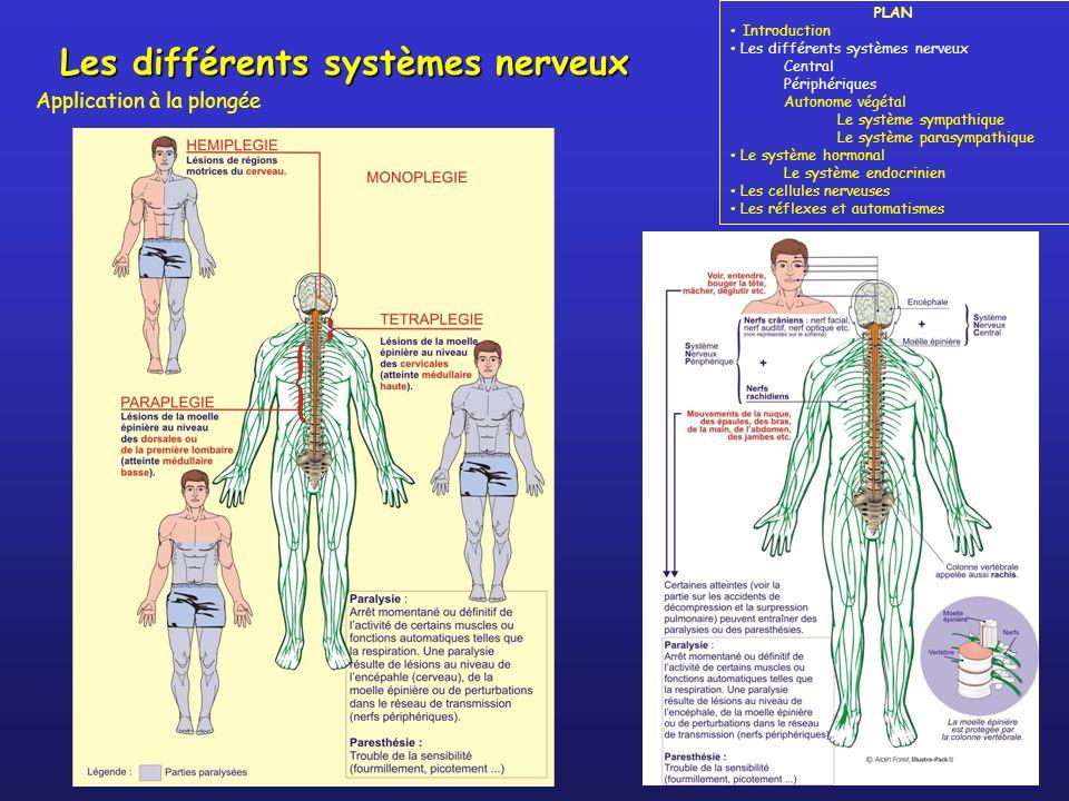 Les différents systèmes nerveux