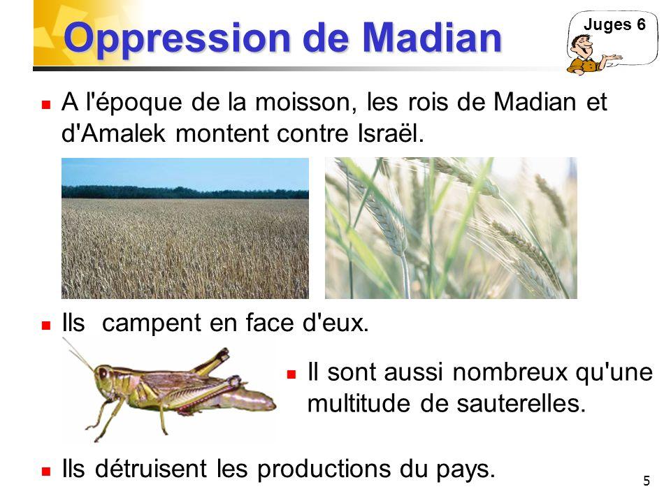 Oppression de Madian Juges 6. A l époque de la moisson, les rois de Madian et d Amalek montent contre Israël.