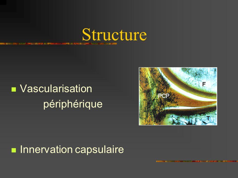 Structure Vascularisation périphérique Innervation capsulaire