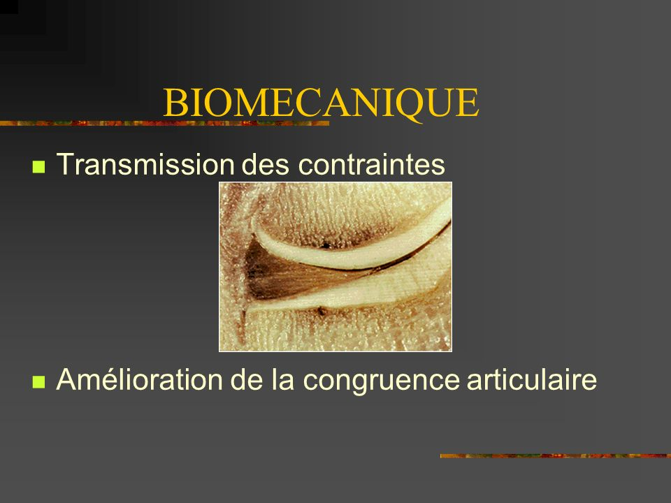 BIOMECANIQUE Transmission des contraintes