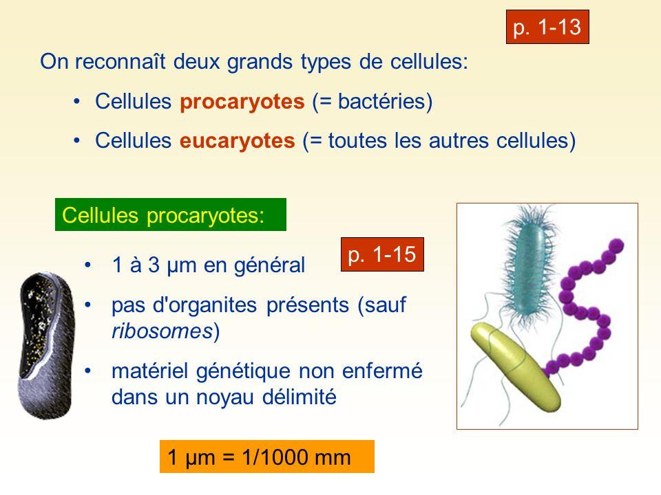 p. 1-13On reconnaît deux grands types de cellules: Cellules procaryotes (= bactéries) Cellules eucaryotes (= toutes les autres cellules)