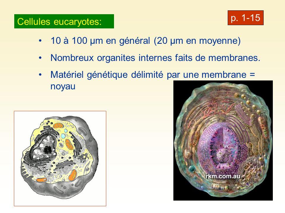 p. 1-15 Cellules eucaryotes: 10 à 100 µm en général (20 µm en moyenne) Nombreux organites internes faits de membranes.