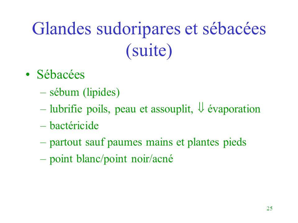 Glandes sudoripares et sébacées (suite)