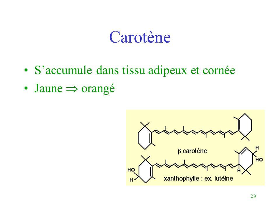 Carotène S'accumule dans tissu adipeux et cornée Jaune  orangé