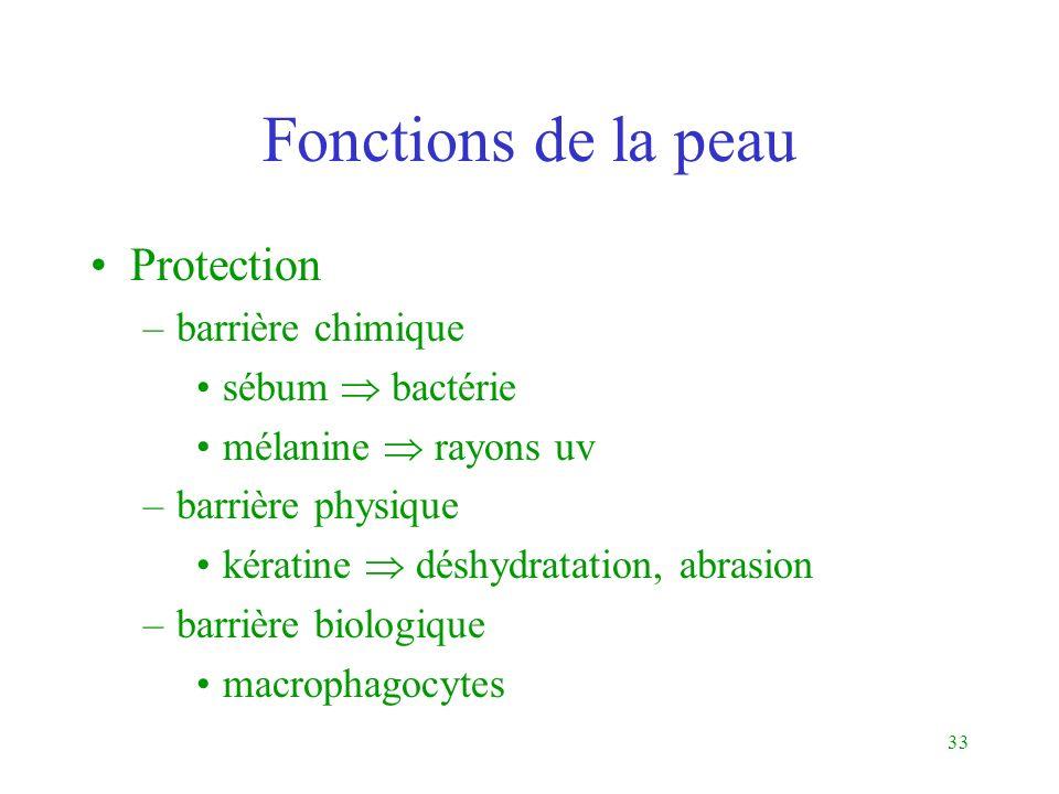 Fonctions de la peau Protection barrière chimique sébum  bactérie