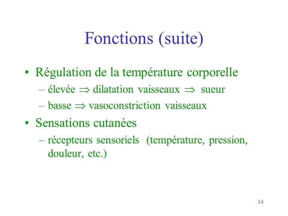 Fonctions (suite) Régulation de la température corporelle