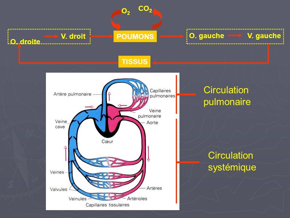 Circulation pulmonaire