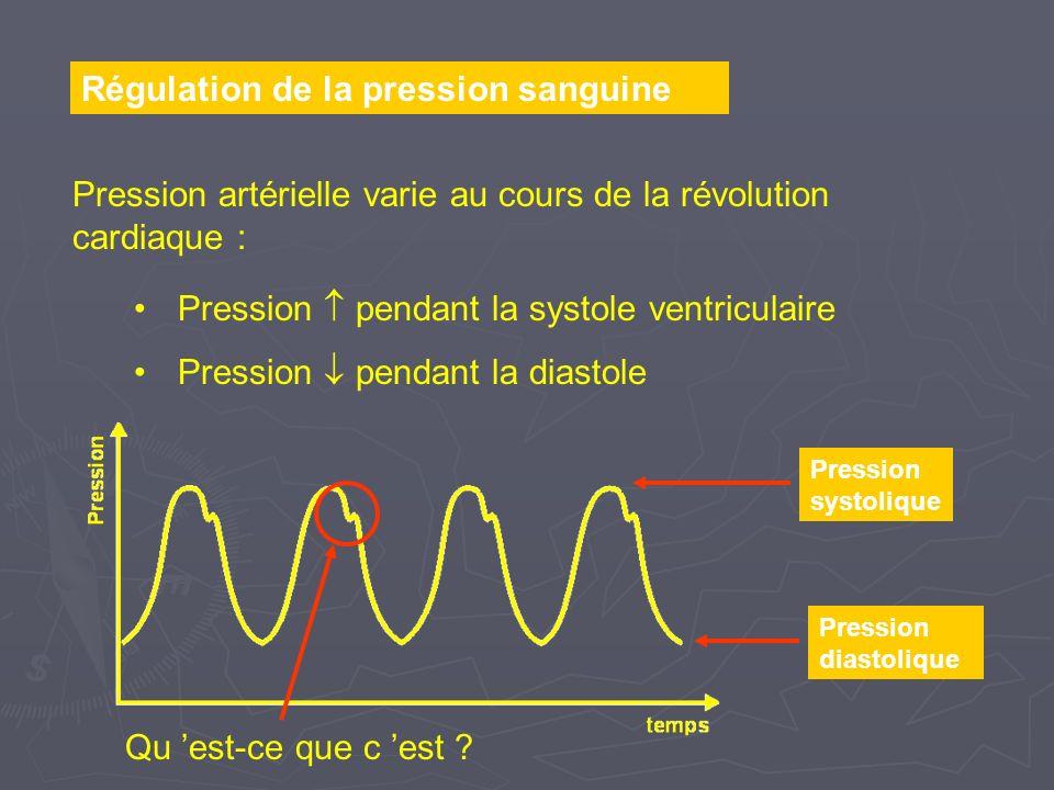 Régulation de la pression sanguine