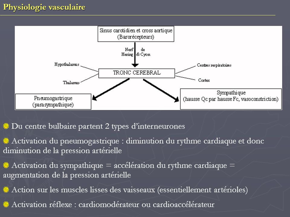 Physiologie vasculaire