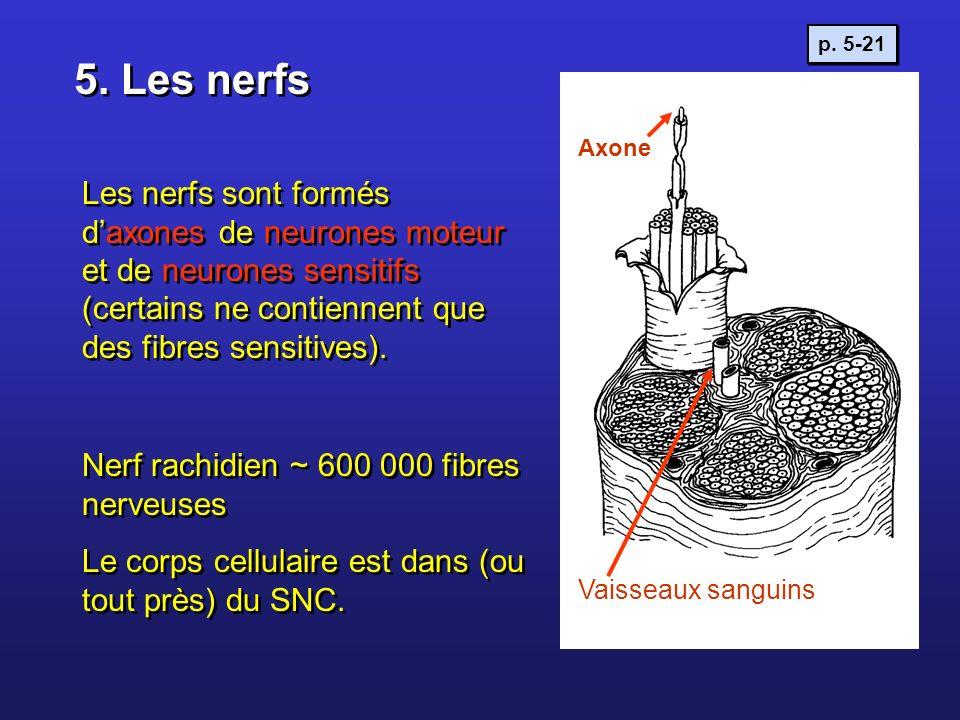p. 5-215. Les nerfs. Axone.