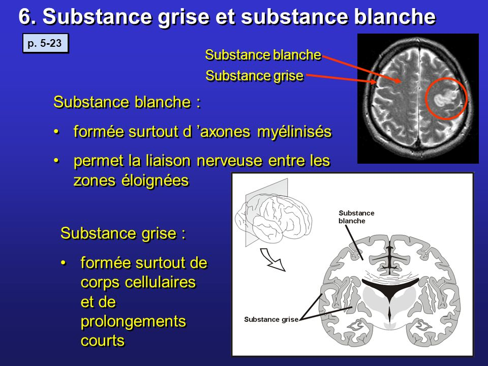 6. Substance grise et substance blanche