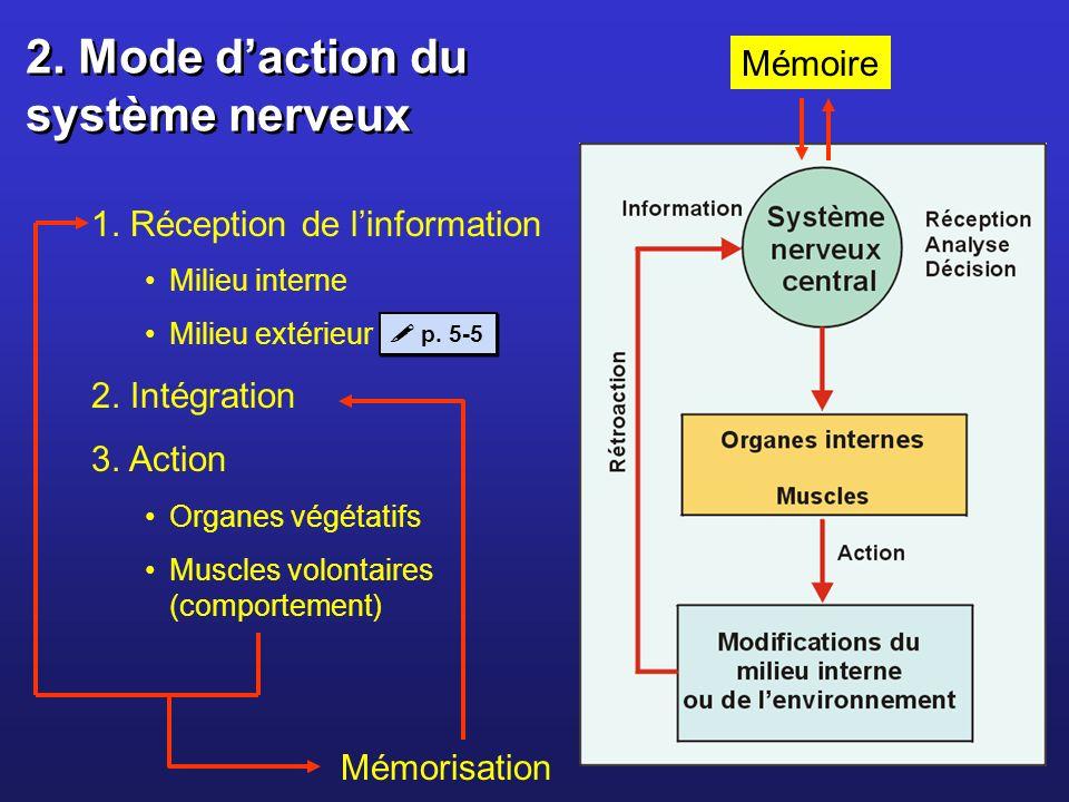 2. Mode d'action du système nerveux