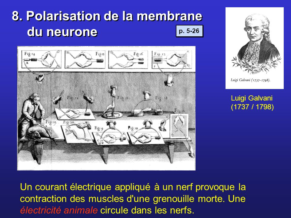 8. Polarisation de la membrane du neurone
