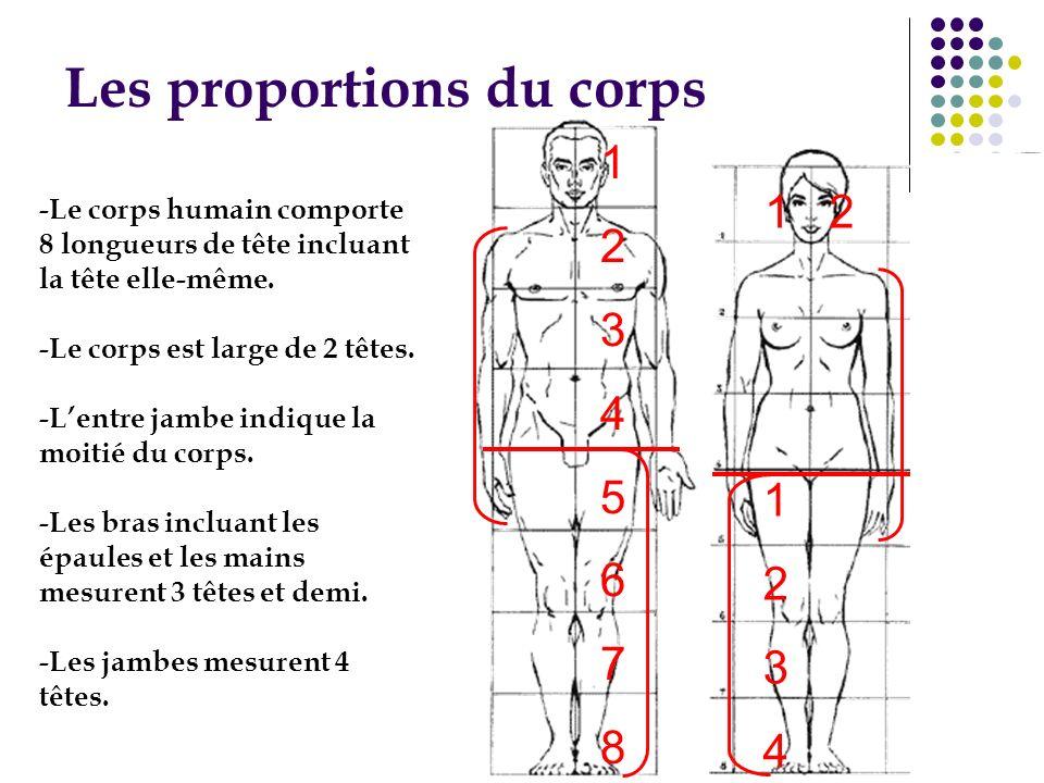 Les proportions du corps