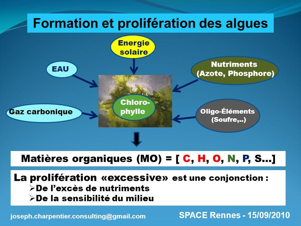 Formation et prolifération des algues