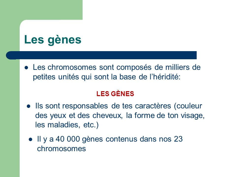 Les gènesLes chromosomes sont composés de milliers de petites unités qui sont la base de l'héridité: