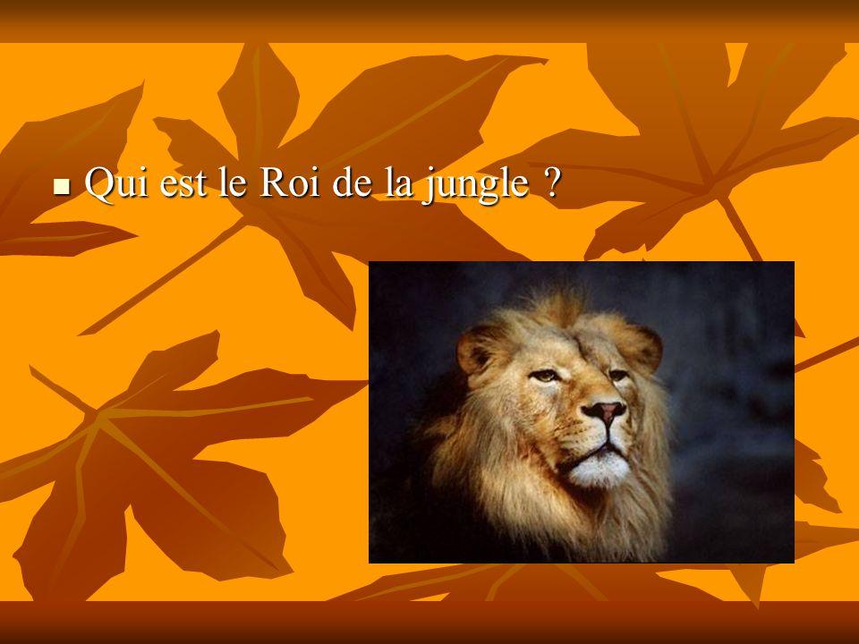 Qui est le Roi de la jungle