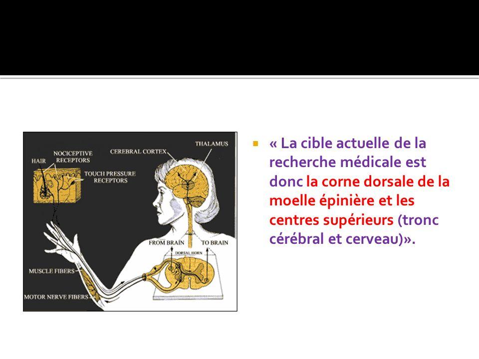 « La cible actuelle de la recherche médicale est donc la corne dorsale de la moelle épinière et les centres supérieurs (tronc cérébral et cerveau)».