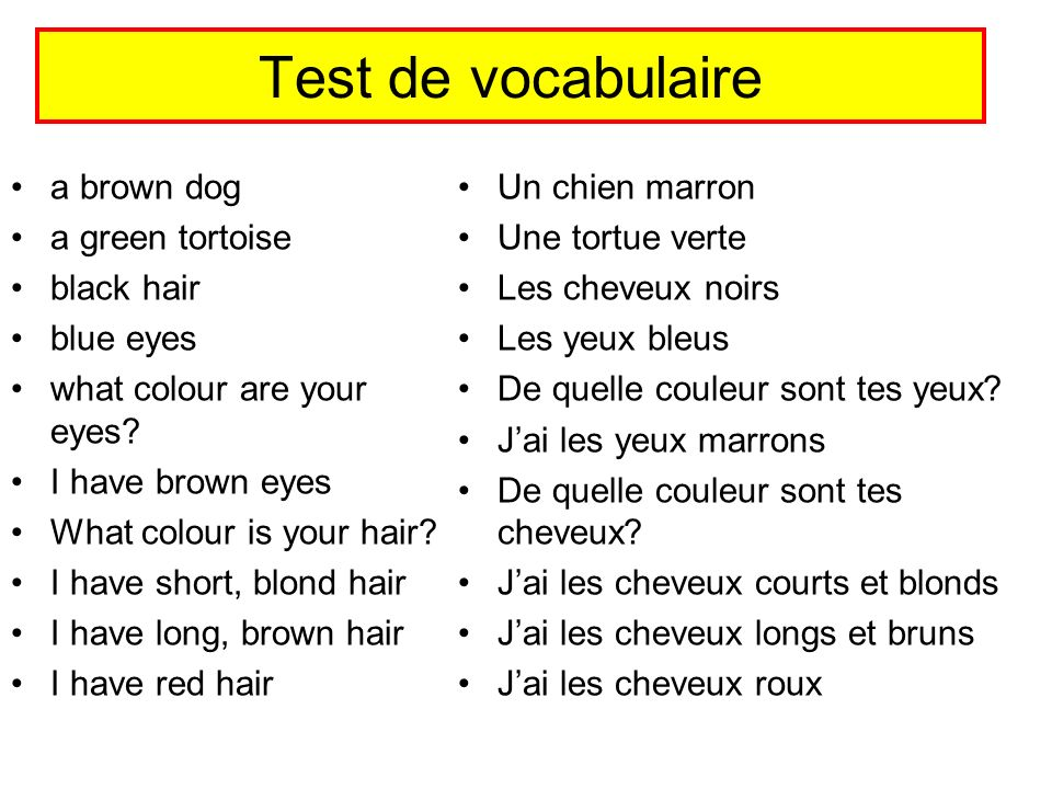 Test de vocabulaire a brown dog a green tortoise black hair blue eyes