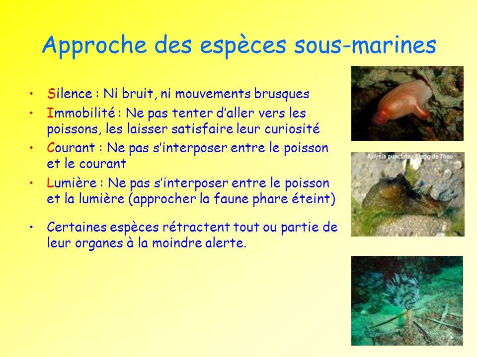 Approche des espèces sous-marines