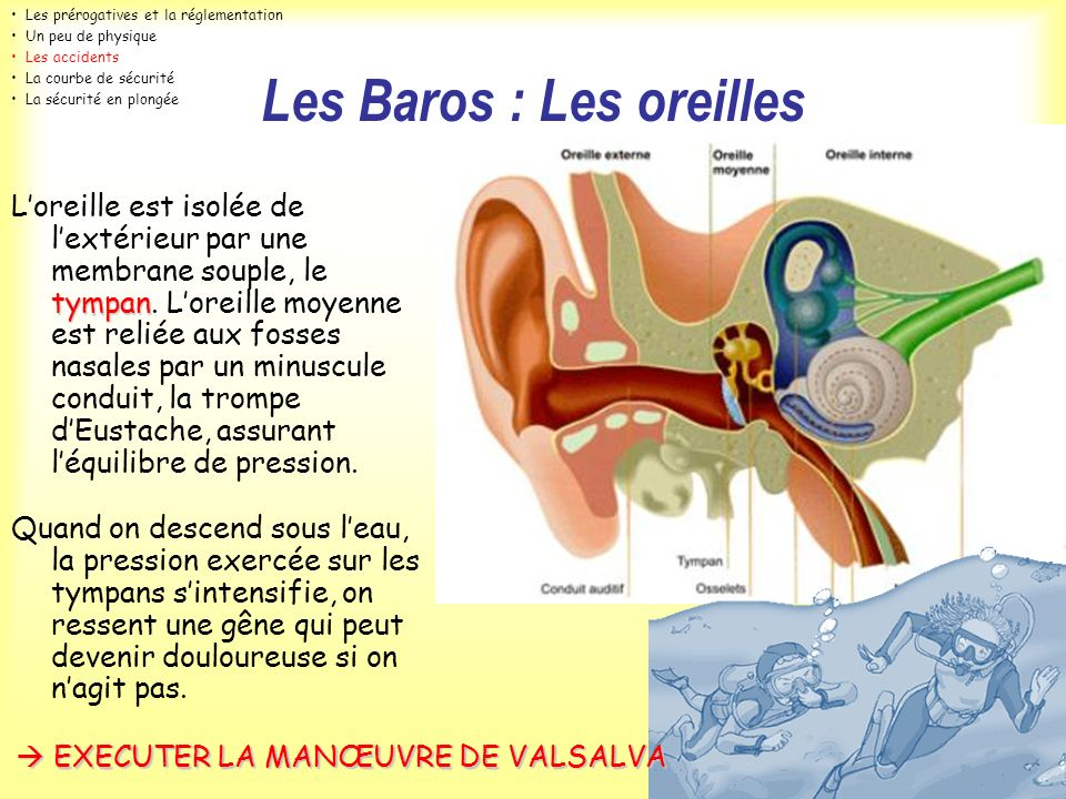 Les Baros : Les oreilles