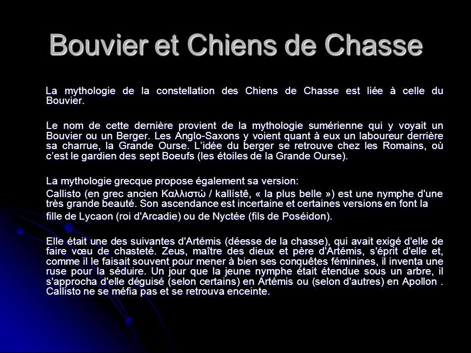 Bouvier et Chiens de Chasse