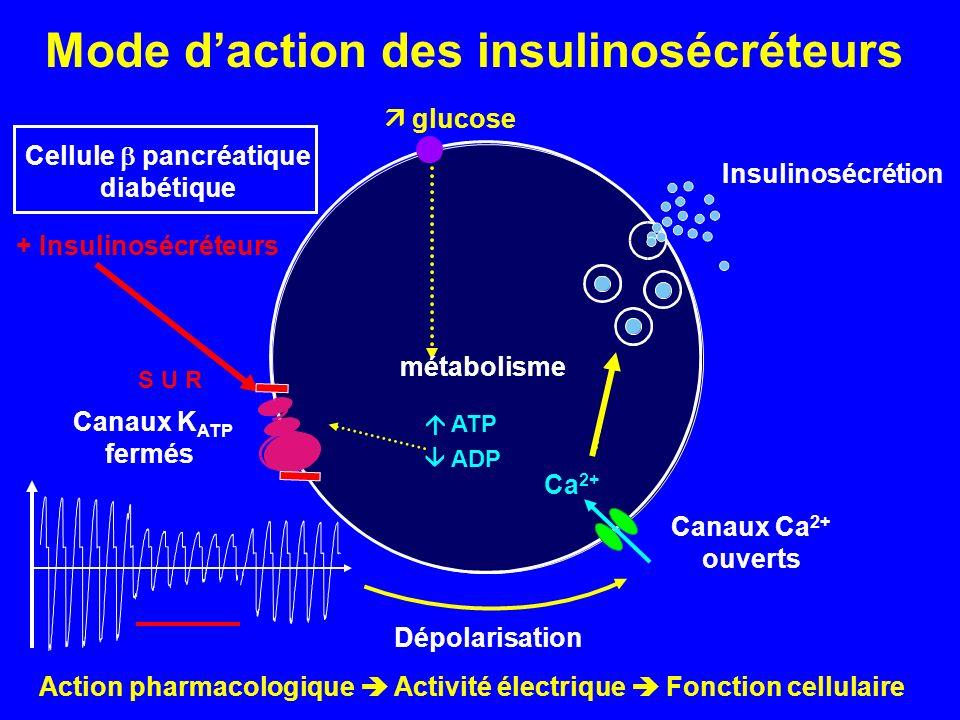 Mode d'action des insulinosécréteurs