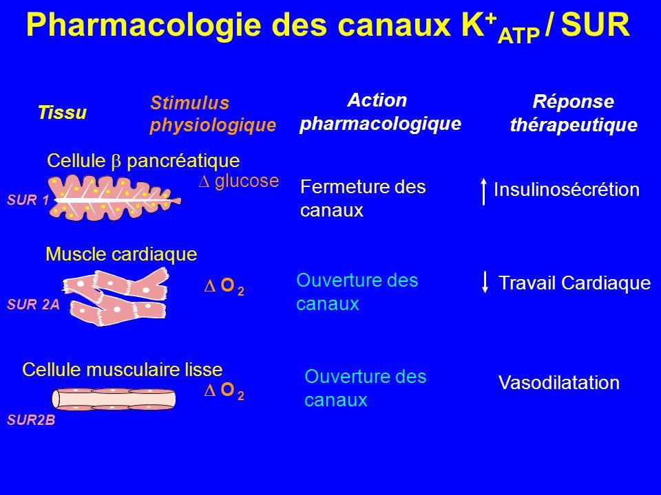 Pharmacologie des canaux K+ATP / SUR