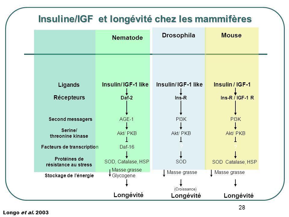 Insuline/IGF et longévité chez les mammifères