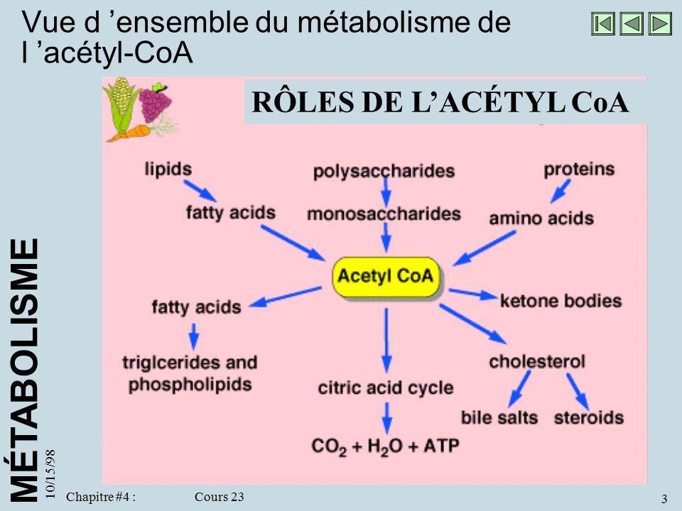 Vue d 'ensemble du métabolisme de l 'acétyl-CoA