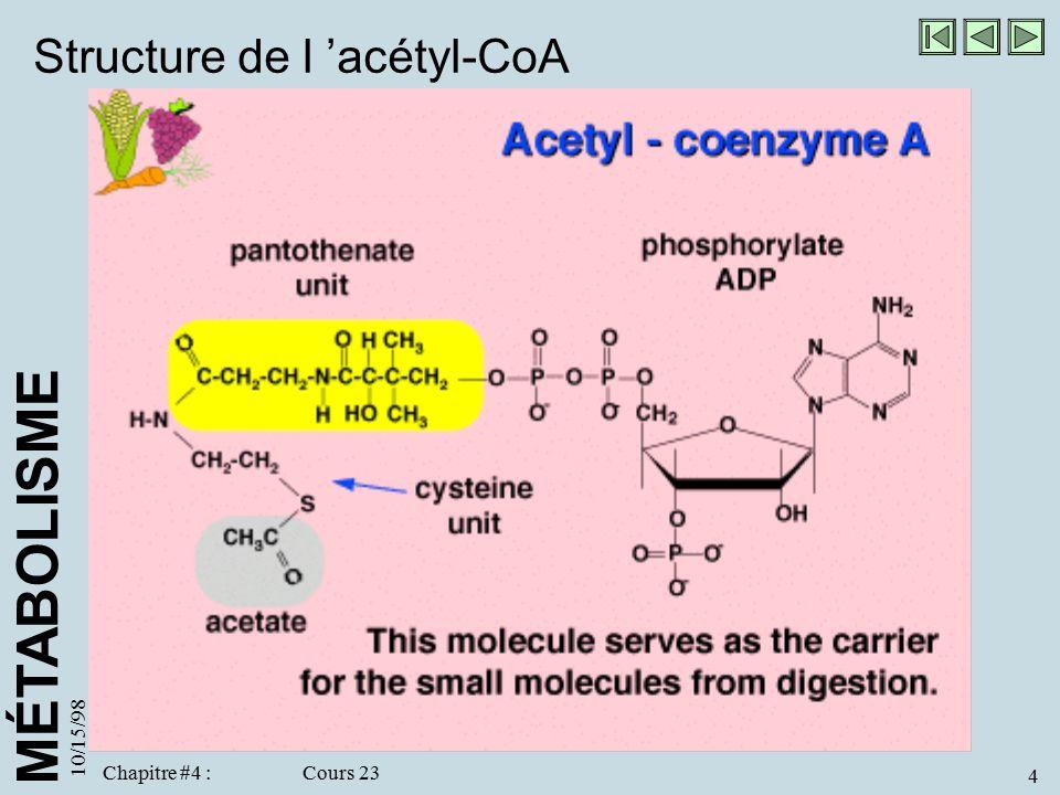 Structure de l 'acétyl-CoA