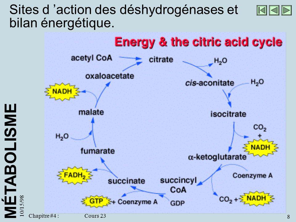 Sites d 'action des déshydrogénases et bilan énergétique.