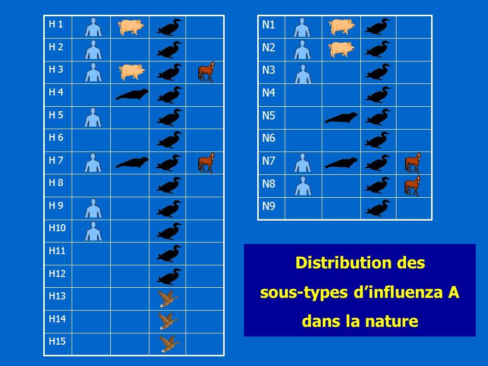 sous-types d'influenza A