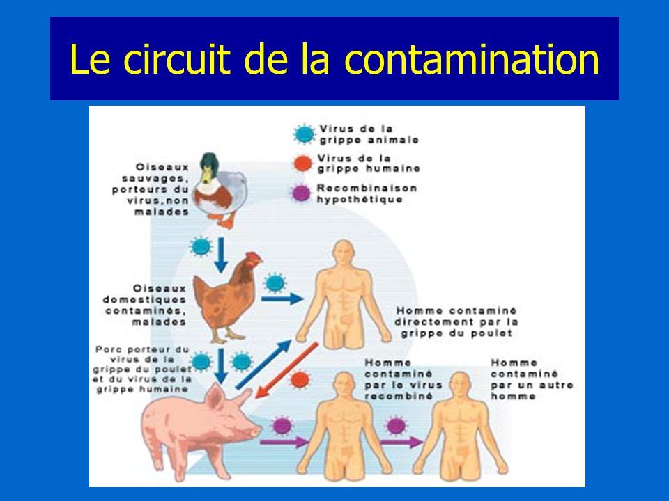 Le circuit de la contamination