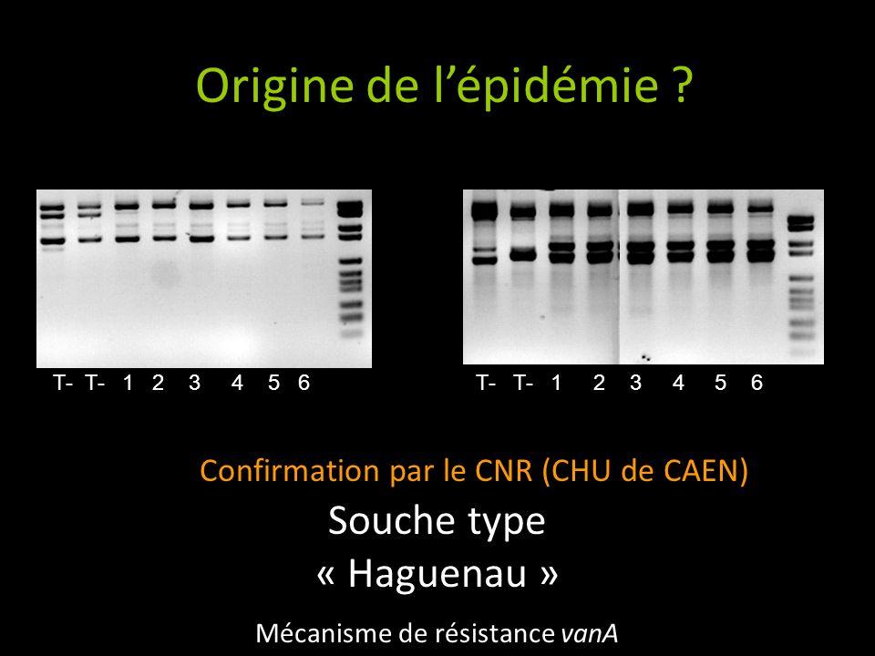 Origine de l'épidémie Souche type « Haguenau »