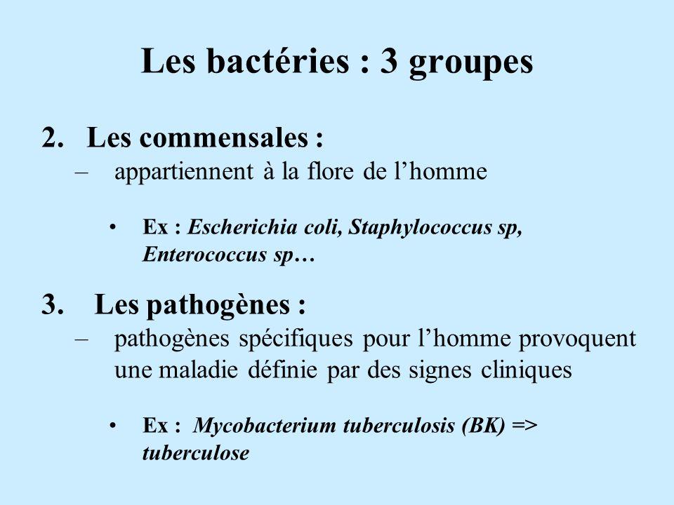 Les bactéries : 3 groupes